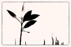 уединённая мангрова стоковые изображения