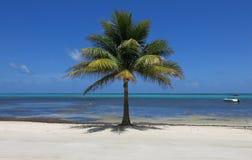 уединённая пальма Стоковые Изображения