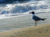 Уединённая чайка на пляже Стоковая Фотография RF