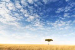 Уединённое дерево акации в Masai Mara Стоковые Изображения RF