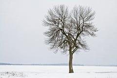 Уединённое дерево в поле снега Стоковое Фото
