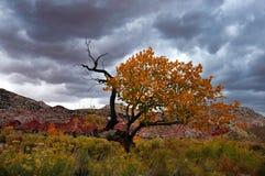 Уединённое дерево в пустыне Юты Стоковые Изображения