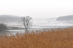 Уединённое дерево в тумане Стоковое Изображение
