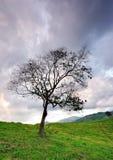 Уединённое дерево в луге с драматическим небом Стоковое Изображение RF