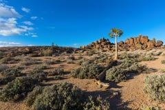Уединённое дерево колчана Стоковое Изображение RF