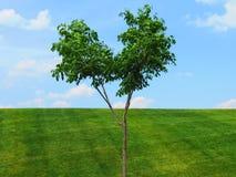 Уединённое дерево над небом зеленой травы голубым Стоковые Изображения RF
