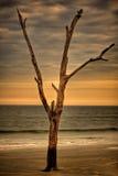 Уединённое дерево на пляже на заходе солнца Стоковые Изображения RF