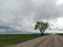 Уединённое дерево на сиротливой дороге Стоковые Фотографии RF