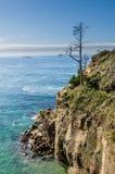 Уединённое дерево на headland обозревая океан Стоковое фото RF
