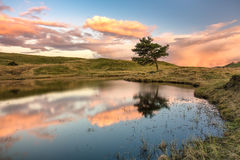 Уединённое дерево озером на заходе солнца Стоковая Фотография RF