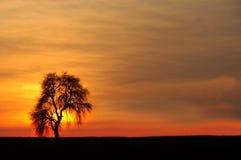 Уединённое дерево против заходящего солнца стоковое изображение
