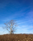 Уединённое дерево против неба в зиме Стоковое фото RF