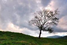 Уединённое дерево с темным и унылым небом Стоковые Изображения