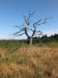 Уединённое дерево Стоковые Изображения RF