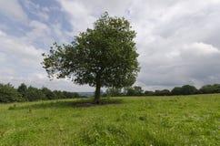 Уединённое дерево Стоковые Фото