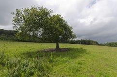 Уединённое дерево Стоковое Изображение RF