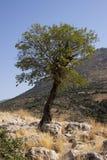 Уединённое дерево стоковая фотография