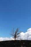 Уединённое мертвое дерево против голубого неба Стоковое фото RF