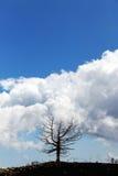 Уединённое мертвое дерево против облачного неба Стоковые Фото