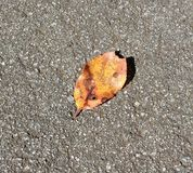 Уединённые листья Стоковое фото RF