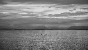 Уединённые утки Стоковые Изображения RF