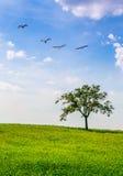 Уединённый ландшафт и птицы дерева Стоковое Изображение RF