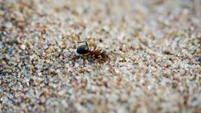 Уединённый муравей бежит вдоль песка против ветра акции видеоматериалы