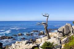 Уединённый ствол дерева на приводе 17 миль Стоковые Изображения