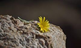 Уединённый цветок Стоковые Изображения RF
