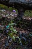 Уединённый цветок стоковая фотография rf