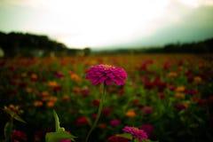 Уединённый цветок стоковое изображение rf