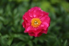 Уединённый цветок стоковые изображения