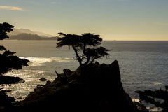 Уединённый Cypress, привод 17 миль стоковое фото rf