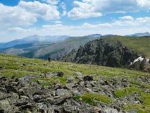 Уединённый Hiker около пика Hallet в национальном парке скалистой горы стоковое фото rf
