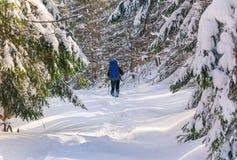 Уединённый hiker с рюкзаком идя вдоль следа в горах зимы Стоковые Фото