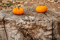2 уединённых тыквы Стоковые Фото