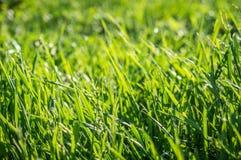 лужайка зеленого цвета травы предпосылки Стоковая Фотография