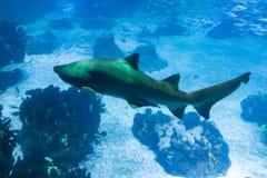 Ужасная акула стоковые изображения