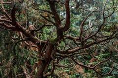 Ужасный мечтательный загадочный взгляд леса Стоковое фото RF