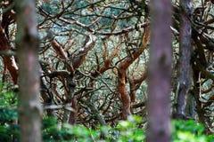 Ужасный мечтательный загадочный взгляд леса Стоковые Фото
