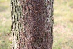 Ужас гусеницы Стоковая Фотография RF