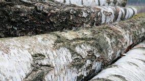 Уже спиленное дерево в лесе видеоматериал