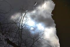 лужица Стоковая Фотография RF