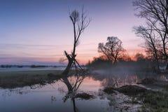лужки над восходом солнца Стоковые Изображения