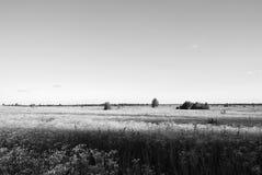 лужки Стоковая Фотография