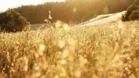 лужок Польша сухой травы Красивейшая осень акции видеоматериалы