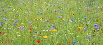 лужок цветка одичалый Стоковые Изображения RF