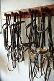Уздечки halters headgear тэкса лошадей в ряд стоковые изображения rf