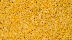 Узел желтых чечевиц Стоковая Фотография
