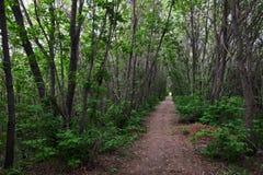 Узкая дорога среди деревьев стоковое изображение rf